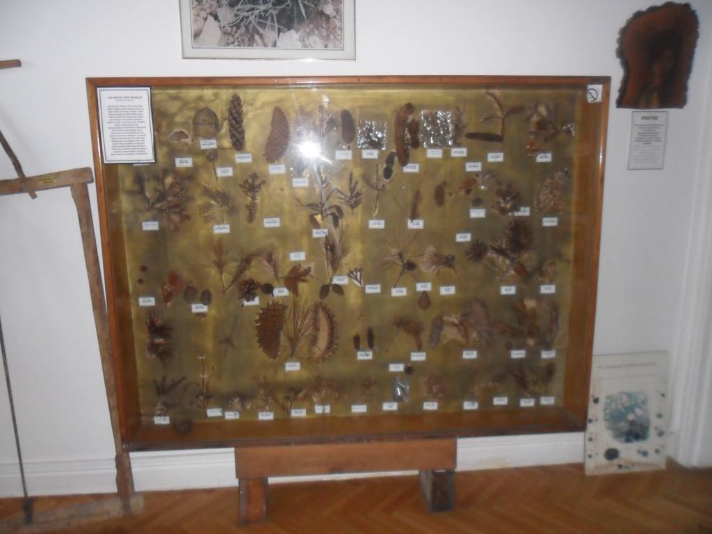 Ormancılık Müzesi Cam Kozalak Türleri