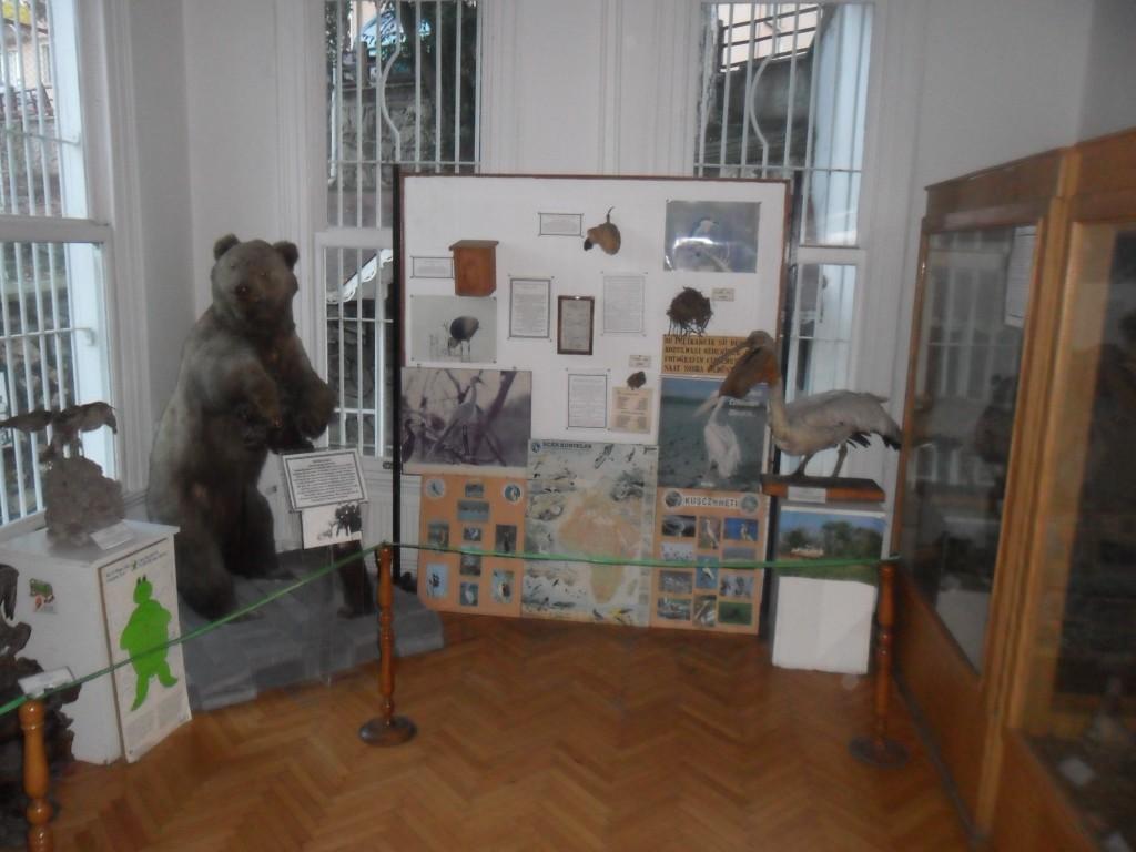 Ormancılık Müzesi Doldurulmuş Hayvanlar