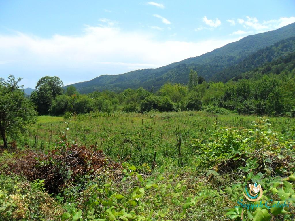 Cumalıkızık Köyü Uludağ Manzarası
