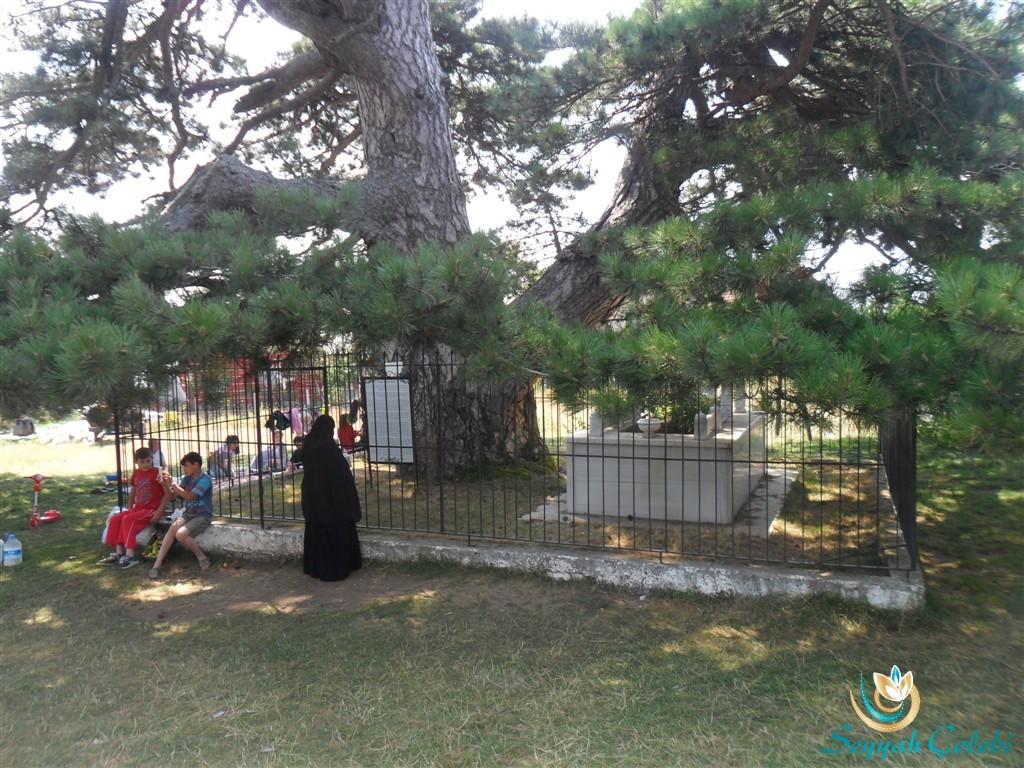 Dolubaba ve Çınar Ağacı