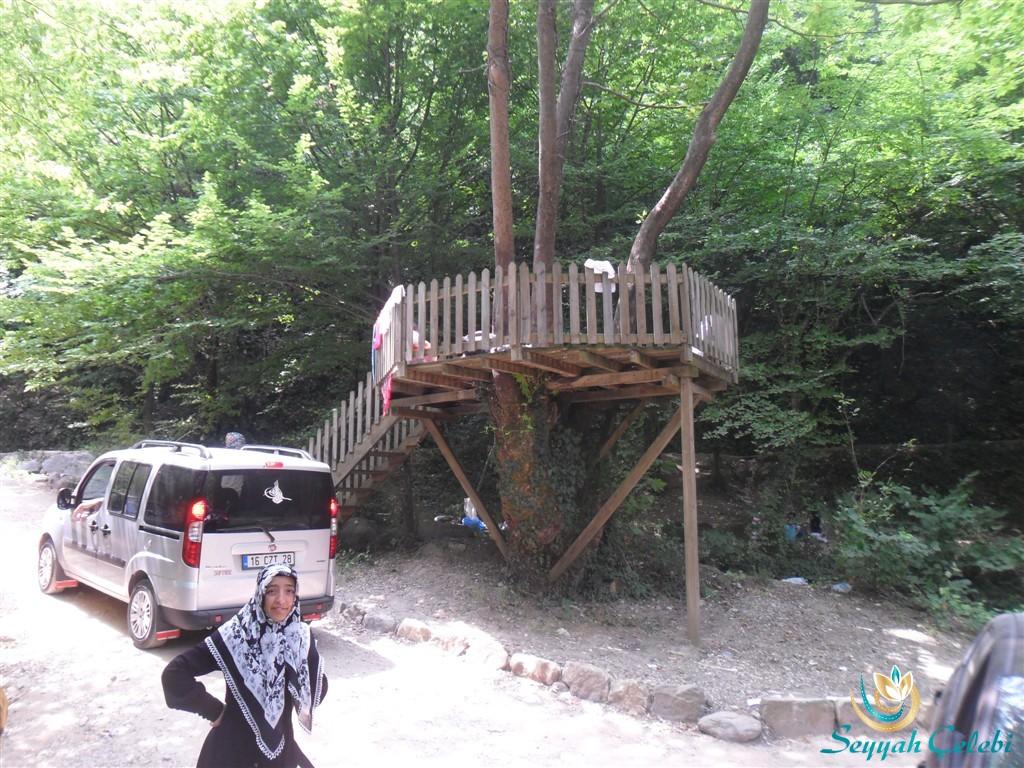 Hamamlıkızık Kent Ormanı Ağaçta Piknik