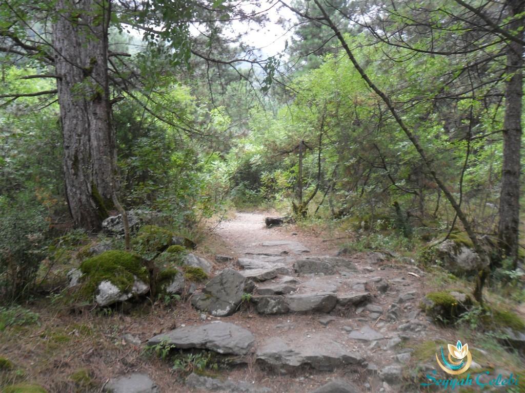 Kürekli Şelale Orman