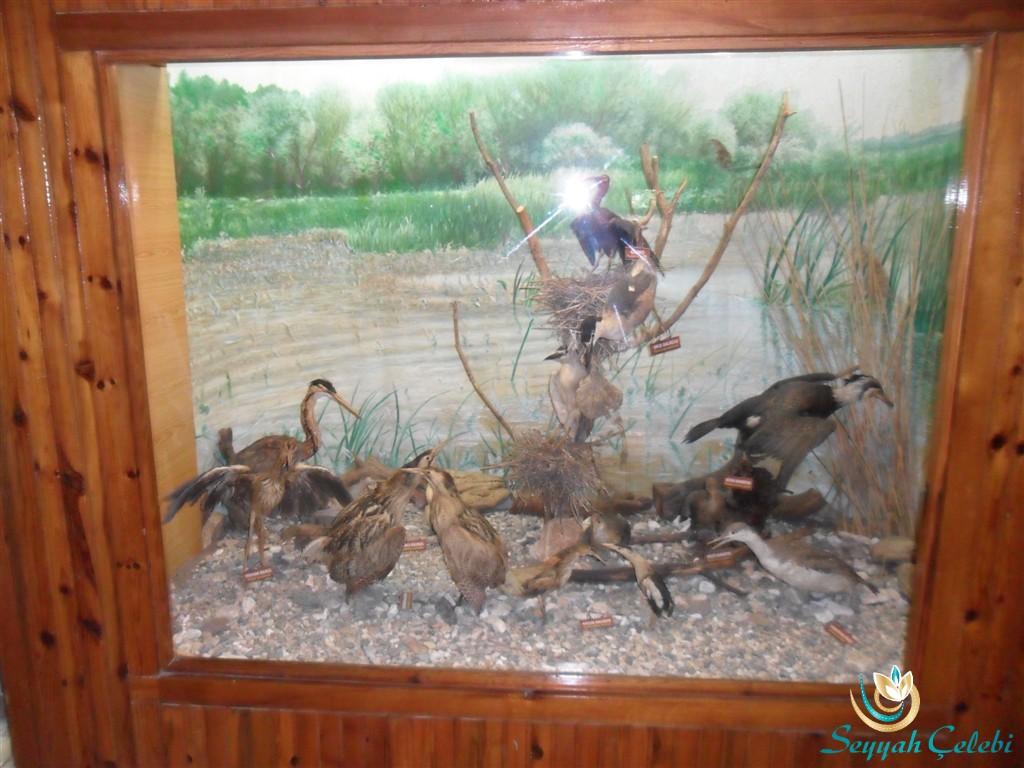 Kuşcenneti Müze İçerisi
